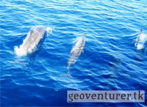 Dolphin watching at Puerto Princesa Bay