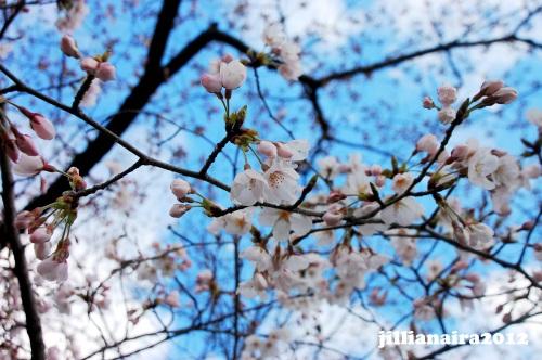 kyoto-spring