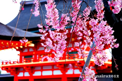 Spring flowers at the Fushimi Inari Shrine grounds