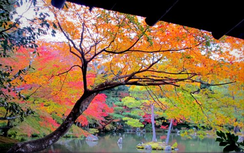 Autumn colors in Kinkakuji's pond