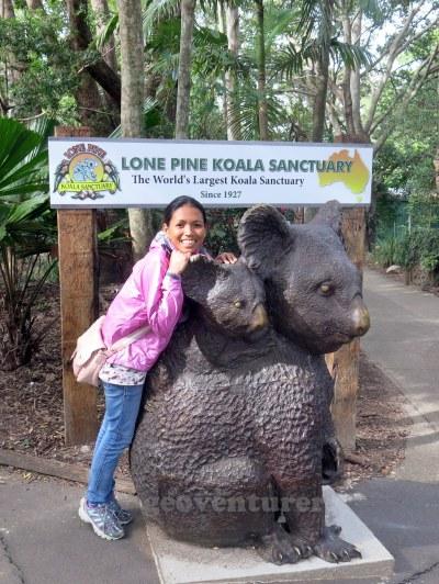 Clingy koala!