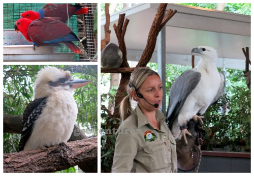 Some of the birds at the sanctuary
